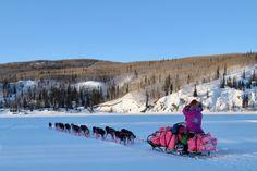 Eye on the Trail: From Nenana – Iditarod