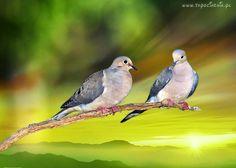 Ptaki, Parka, Gołębie