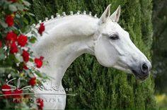 Oldenberg Horse
