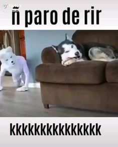 Funny Videos, Funny Video Memes, Funny Relatable Memes, Animal Quotes, Animal Memes, Animal Humor, Animal Pics, Cute Funny Animals, Funny Dogs