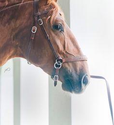 Haras Dos Cavaleiros, Lusitano Horses Magnolia Texas