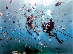 La posibilidad de bucear en centenares de lugares únicos en un solo país   La transparencia y calidez del agua en República Dominicana permiten a los buceadores maravillarse de la flora y fauna submarina repleta de formas y colores.  Bajo las aguas cálidas y cristalinas de las paradisíacas playas de República Dominicana una exuberante vida marina invita a los turistas a explorar el universo subacuático. A lo largo de sus 1.576 kilómetros de costa el destino ofrece magníficos arrecifes y…