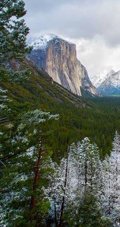 Photo by: Susan Taylor Fine Art Photography #Yosemite #Mariposa #YosemiteNation #YosemiteExperience #photooftheday #instamood #picoftheday, #adventure #nature #outdoors #beautiful