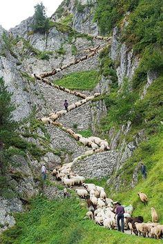 Sheepherders perto de Blatten, Suíça