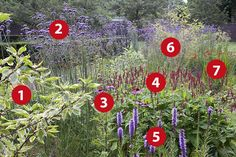 Alle bloemen in deze kleurrijke border zijn aantrekkelijk voor bijen, vlinders en andere nuttige insecten. Er is bloei van mei tot ver in oktober.