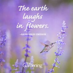 of the Best Spring Quotes Ten of the best spring time quotes! - Quotes about flowers and gardening - From Fine Ten of the best spring time quotes! - Quotes about flowers and gardening - From Fine Fine Gardening, Organic Gardening, Vintage Gardening, Gardening Apron, Gardening Books, Vegetable Gardening, Lavender Quotes, Lavender Ideas, Springtime Quotes