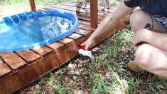 Outdoor Dog Area, Backyard Dog Area, Dog Friendly Backyard, Outdoor Dog Runs, Outdoor Ideas, Diy Dog Run, Diy Dog Yard, Dog Enclosures, Dog Pond