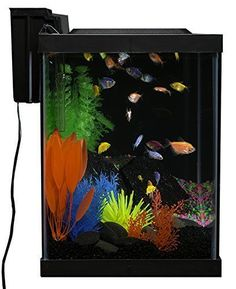 20 Gallons Glass Tank