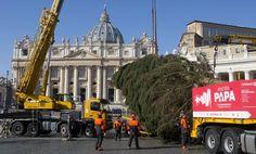 Árvore de Natal é levantada na praça São Pedro. (foto: ANSA)