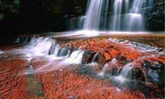 ...las alfombras rojizas de Canaima y su manantial de colores