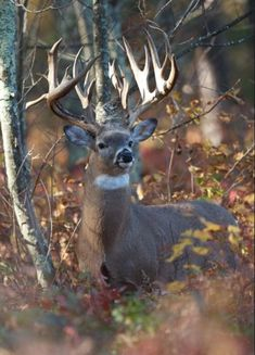 Gorgeous buck on high alert. Always happens when your hunting buddy has buck fever and can't keep from moving! Whitetail Deer Pictures, Whitetail Deer Hunting, Deer Photos, Deer Hunting Tips, Big Whitetail Bucks, Hunting Stuff, Animals And Pets, Cute Animals, Strange Animals