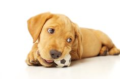 How to Raise a Problem Dog ::   http://www.quickanddirtytips.com/pets/puppies/how-to-raise-a-problem-dog