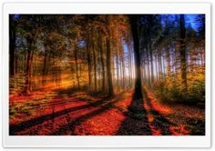 Sunny Autumn Day HD Wide Wallpaper for Widescreen