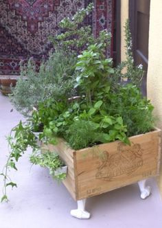 "wine crate herb garden  This is great just get any box and then add great ""feet"" to it and you have a useful decorated space for your back yard or front!"
