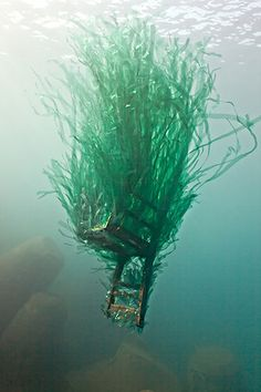 These Underwater Sculptures Of Ocean Pollution by Forlane 6