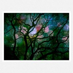 Tree Photography Dark green woodlands tree by moonlightphotography, $28.00