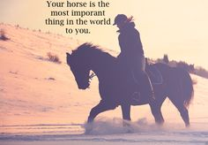 You know you're an equestrian when....    not the most important thing, but pretty high up there