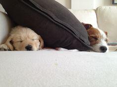 Athos & Kiwi napping