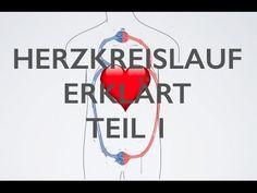Herz Kreislauf Teil 1 | Medizin Grundlagen