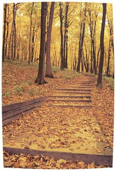 A fall must-see in Iowa: Pikes Peak. Not so much travel, but a beautiful place