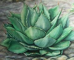 Succulent Painting - Desert Bloom by Conni  Reinecke