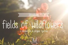 fields of wildflowers- hand font by Sabrina Schleiger on @creativemarket