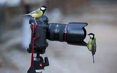 photo camera - Google Search