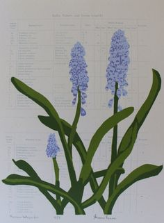 Muscari botryoides by WisteriaStudios on Etsy, $85.00