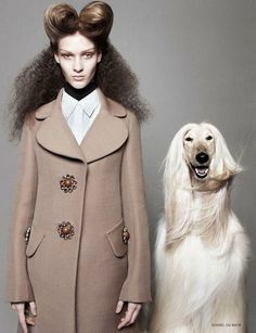 High Fashion and Crufts-worthy Canines | under the blanket