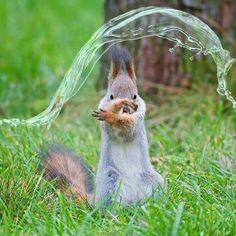 Water bending squirrel?!?