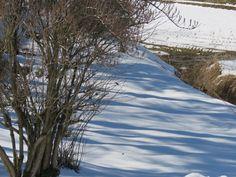 雪の上に映る影. shadows on the snow. 16 February 2017.