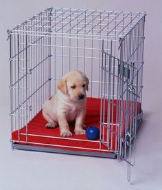 Crate Expectations: 5 Must KnowTips for Crate Training Your Puppy