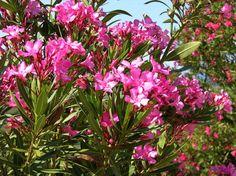 Hogyan teleltessük a fagyérzékeny növényeket? - Növényimádó blog - Fitoland Kertészet