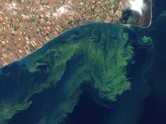 could hurt tourism. -- PHOTO: A satellite photo from a NASA website that shows algae blooms swirling on Lake Erie. A significant blue-green algae bloom in Western Lake Erie this summer could hurt tourism. Lake Erie, Environmental Science, Bloom, Water, Joint Commission, Green Algae, Editorial Board, Sky View, Dead Sea