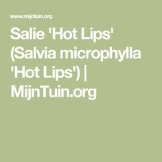 Salie 'Hot Lips' (Salvia microphylla 'Hot Lips') | MijnTuin.org