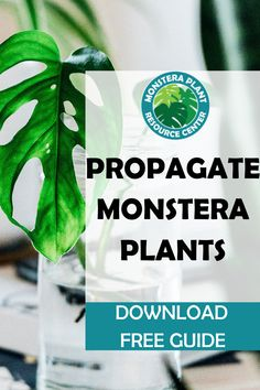 Propagation allows you to clone your favorite plants, grow your plant collection, and enjoy new plants togift or keep.Propagation Promoter is specifically designed to provide essential nutrients that encourage new growth for a wide variety of houseplant cuttings. #monstera Cuttings, Propagation, Spider Plants, New Growth, Plant Care, Houseplants, Encouragement, Posts, Blog
