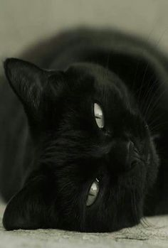 BEAUTIFUL CAT ~ REMINDS ME OF OUR <3 LOUIS <3 <3 <3 XOXO