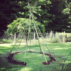 The Trahan living teepee! Finally got it! Beans are planted at each pole and will be adding herbs inbetween to keep the slugs and snails away.
