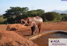Das künstliche Wasserloch der Station wird nicht nur zum Trinken genutzt, die kleinen Rüsselträger spritzen sich zur Abkühlung auch mit dem Wasser ab. Nairobi, Elephant, Animals, Elephants, National Forest, Drinking, Animales, Animaux, Animal