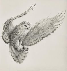 Self-employed artist Vanessa Foley has created the collection of awesome realistic sketches of birds below. She is currently based in Newcastle, England and her work has been featured in galleries in America, New Zealand and the UK. Bird Drawings, Animal Drawings, Drawing Animals, Pencil Drawings, Owl Art, Bird Art, Animal Sketches, Art Sketches, Sketches Of Birds
