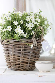 White garden in a basket  (B a r S a n)