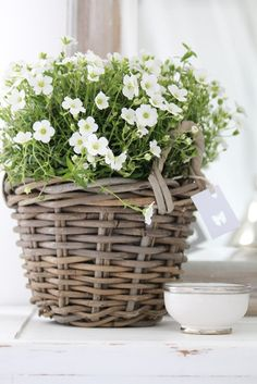 White garden in a basket  (B a r S a n)