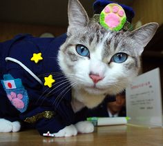 Policeman cat