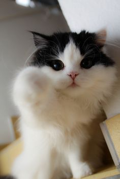 """Boop! {""""He's so fluffy, I'm going to die!""""}"""