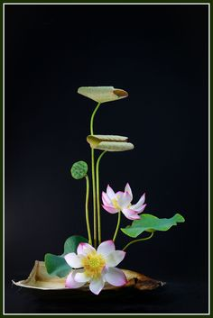 Ikebana, Exotic Flowers, Amazing Flowers, Calla Lily Centerpieces, Lotus Art, Flower Tattoo Designs, Water Lilies, Asian Art, Bonsai