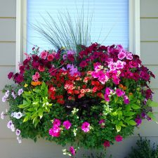 Container Gardening wave petunias, burgundy and lime green potato vines, million bells, marigolds and ornamental grasses. Container Flowers, Flower Planters, Container Plants, Garden Planters, Container Gardening, Wall Planters, Balcony Garden, Hanging Planters, Tree Garden