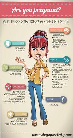 Anatomy of pregnancy week by week