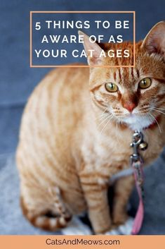 It's never nice to see your cat starting to get older but it happens to the best of them. #ilovemycat #cathealthtips #healthycat