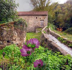moulin fleur gif Corsica Corse