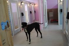 Luxury Dog Boarding Lawton Oklahoma